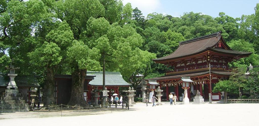 sejour-linguistique-japon